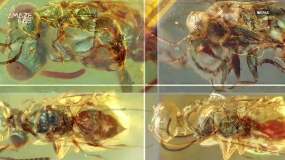 Dazzling Colors of 99-Million-Year-Old Insects Preserved in Amber