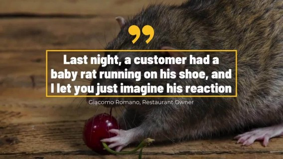 New York Rats Torment Diners As They Eat Outside