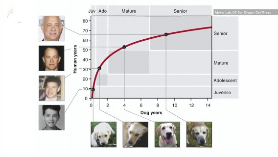 Scientists Create New Chart to Convert Dog Age to Human Years