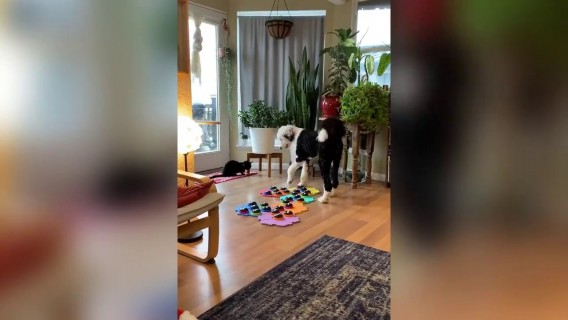 This genius dog learnt how to SPEAK using a sound board (RAW)